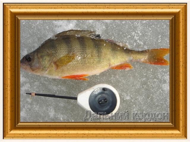 рыболовно охотничий клуб дальний кордон